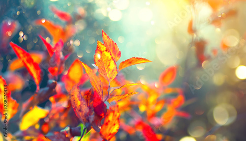 Autumn colorful bright leaves swinging in a tree in autumnal park. Fall colorful background. Beautiful nature scene - 288474474