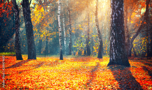 Foto op Plexiglas Herfst Autumn. Fall. Autumnal park. trees and colorful leaves in sun rays. Beautiful autumn nature scene background