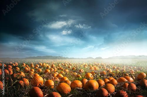 Fotografie, Obraz A spooky halloween pumpkin field with a moody sky