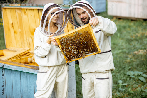 Poster Bee Two young beekepers in protective uniform working on a small apiary farm, getting honeycombs from the wooden beehive