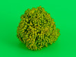 canvas print picture - Broccoli cabbage on a green background