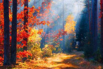 Fototapeta Las Autumn forest landscape