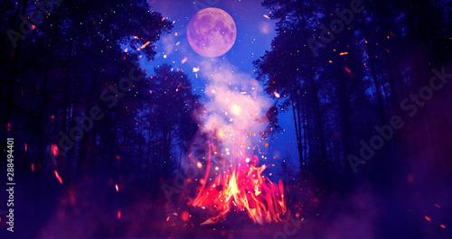 Fotografía Night forest, landscape