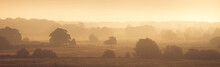 Swanton View