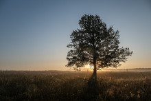 Tree On A Early Autumn Morning In Russia
