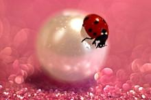 Beetle Ladybug Crawling On A ...