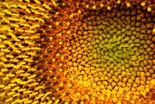 Sunflower Flowers Pistils And ...