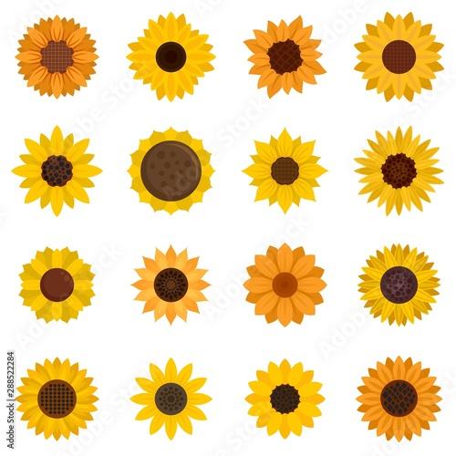 Fotografía  Sunflower icons set
