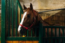 Portrait Of A Beautiful Sad Horse In The Dark Stable