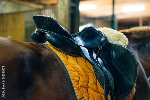 Extreme close up of a saddle and lariat on a brown horse Canvas Print
