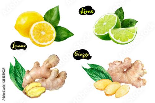 Fototapeta  Ginger lemon lime set watercolor isolated on white background