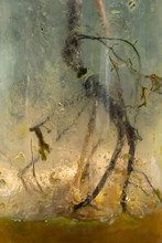 Roots In Glazen Pot Forgotten