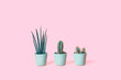 Leinwanddruck Bild - Three different cacti in mint pots on trendy tender candy pink background. Environment friendly summer or spring time minimal design concept with copy space