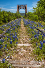View Down An Abandoned Railway Track Covered With Texas Blue Bonnets And Bridge