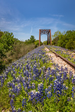 View Of The Hillside  Covered With Blue Bonnets On An Abandoned Railway Track