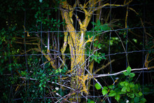 A Tree Inside A Fence With Gre...