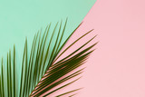 Green Tropical leaves palm tree on color background