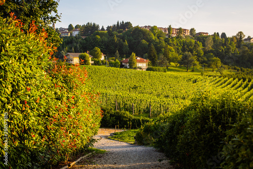 Wine country in northern Italy with vineyards
