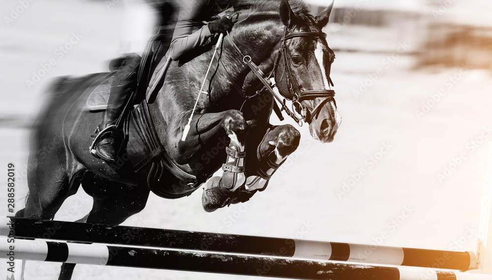Fototapety, obrazy: The horse overcomes an obstacle.Show jumping