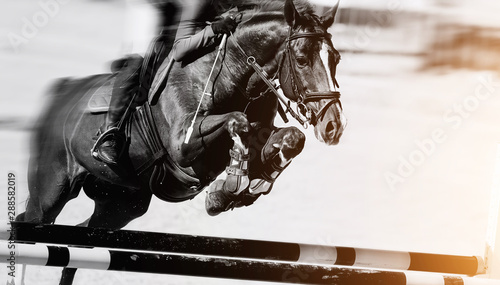 Fototapeta The horse overcomes an obstacle.Show jumping obraz