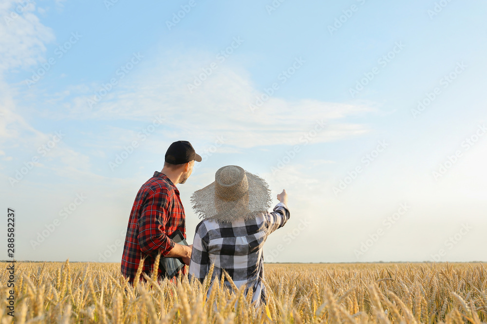 Fototapety, obrazy: Farmers in field on sunny day
