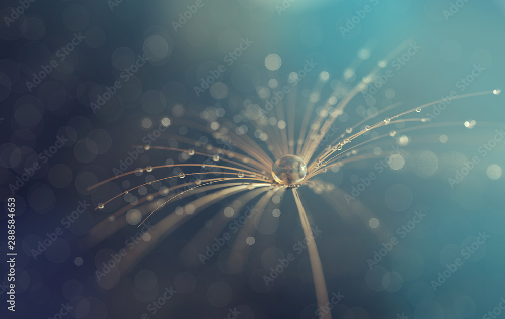 Fototapety, obrazy: Dandelion seeds in the drops of dew, blurred background with bokeh. Water drops on dandelion 3d render