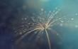 Dandelion seeds in the drops of dew, blurred background with bokeh. Water drops on dandelion 3d render