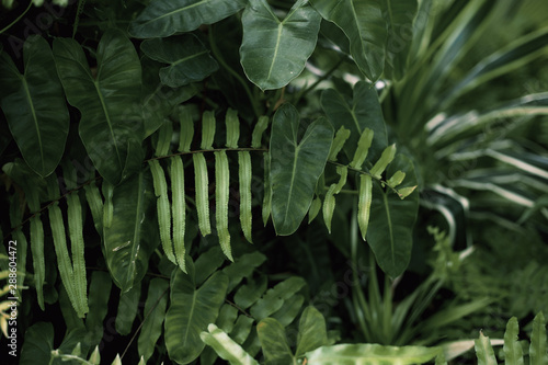 Printed kitchen splashbacks Garden Leaves of fern with background.