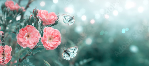 Photo Stands Floral Mysterious spring floral banner with blooming rose flowers and flying butterflies on blurred background in soft pastel colors and shiny glowing bokeh