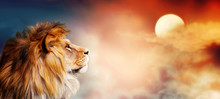 African Lion And Sunset In Africa. Savannah Landscape Theme, King Of Animals. Spectacular Warm Sun Light And Dramatic Red Cloudy Sky. Proud Dreaming Fantasy Leo In Savanna Looking Forward.