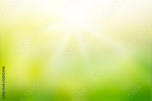 Obraz Sunlight with abstract blurred green nature background - fototapety do salonu