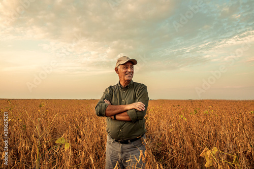 Leinwand Poster Senior farmer standing in soybean field examining crop at sunset.