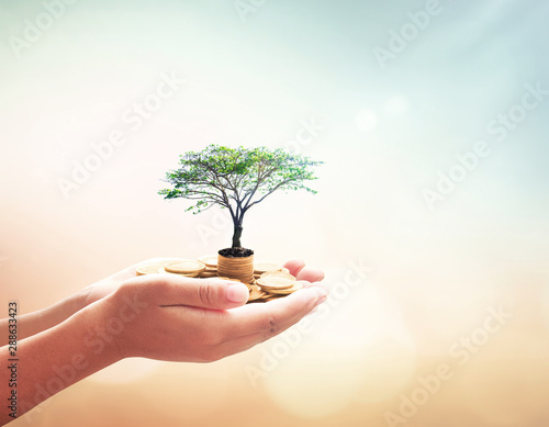 Fototapety, obrazy: Government pension fund concept: Human hands holding stacks of golden coins and growth tree on blurred green nature autumn sunset background