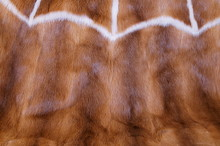 Animal Fur Background. Texture Of Furry - Fur Natural. Animal Wildlife Concept And Style. Textures And Backgrounds. Close-up, Full Frame Of A Fur Coat , Two Tones