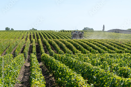 Cuadros en Lienzo  Vineyard landscape tractor spraying of grapevines in Margaux Medoc near Bordeaux