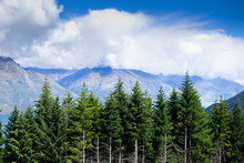 Row Of Pine Trees And Mountain...