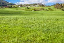 Paysage Rural, Plaine Des Cafres, île De La Réunion
