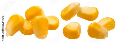 Obraz Fresh corn seeds isolated on white background with clipping path - fototapety do salonu