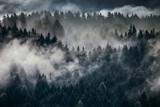 Gęsta poranna mgła w alpejskim krajobrazie z jodłami i górami. - 288654273