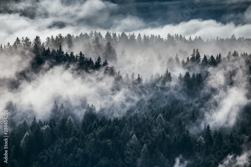 Foto op Canvas Bleke violet Dense morning fog in alpine landscape with fir trees and mountains.