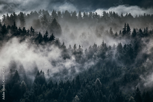 Montage in der Fensternische Schwarz Dense morning fog in alpine landscape with fir trees and mountains.