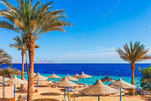 Fotografiet  Sunny resort beach with palm tree at the coast shore of Red Sea in Sharm el Sheikh, Sinai, Egypt, Asia in summer hot