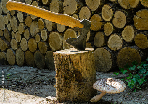 Photo Beautiful poisonous forest mushroom grows on oak stump on blurry background of oak stumps