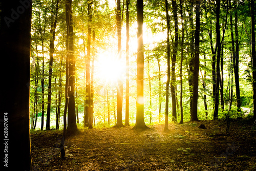 Fototapety, obrazy: rays of sun in the forest