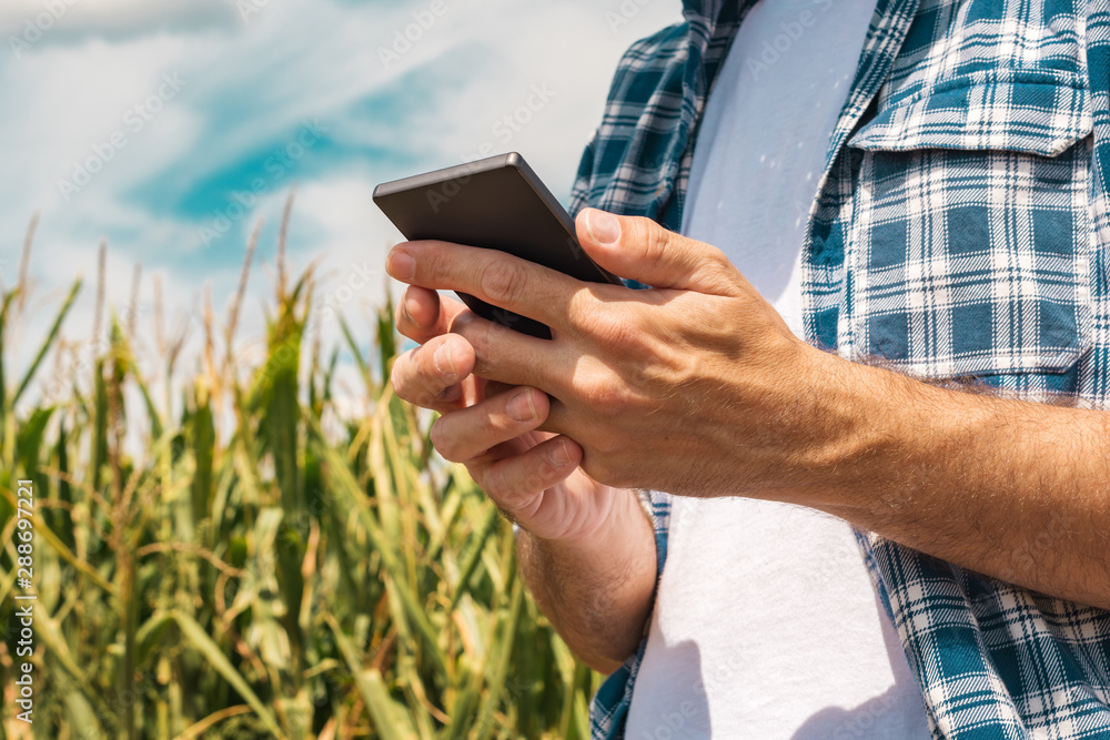 Leinwandbild Motiv - Bits and Splits : Agronomist typing text message on smartphone out in corn field