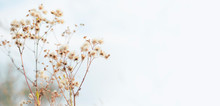 Autumn Background - Stems Of D...