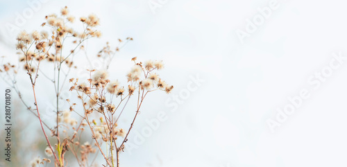 Cuadros en Lienzo  Autumn background - Stems of dry grass on a blurred grey background, soft focus,