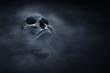 canvas print picture - Human skull on dark background