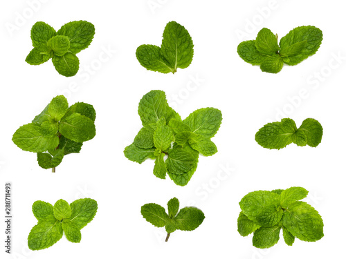 Fototapeta Fresh mint leaves pattern isolated on white background, top view. Close up of peppermint  obraz na płótnie