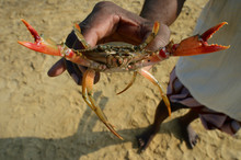 One Person Holding A Crab In H...